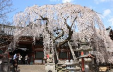 Himuro-jinja Shrine was built at the foot of Mt.Kasuga-yama at the time of transfer of Heijo Capital. It used to be in Tenri city next to Nara city. Himuro (literally ice house) is a shrine dedicated to the God of ice. In its festival, a pole made of ice which was packed with carps and breams inside is put in front of the God.