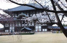 View of Main Hall during the Sakura Season.