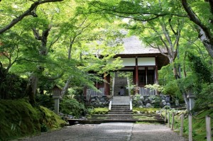 The Jewel of Sagano: Jojakko-ji Temple!