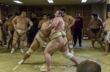 Morning practice of the sumo wrestlers from Kasugano Stable (春日野部屋), preparing for the grand spring tournament in Osaka. Tochinoshin (栃ノ心 剛), a wrestler from Georgia perfecting his style.